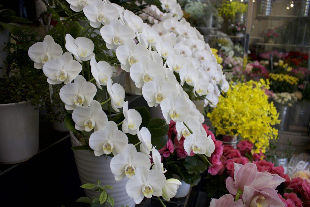 西宮北口にある兵庫県立芸術文化センターへのお祝い花もお任せ下さい!